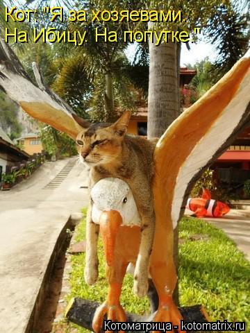 """Котоматрица: Кот: """"Я за хозяевами.  Кот: """"Я за хозяевами.  На Ибицу. На попутке."""""""