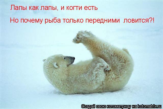 Котоматрица: Лапы как лапы, и когти есть Но почему рыба только передними  ловится?!