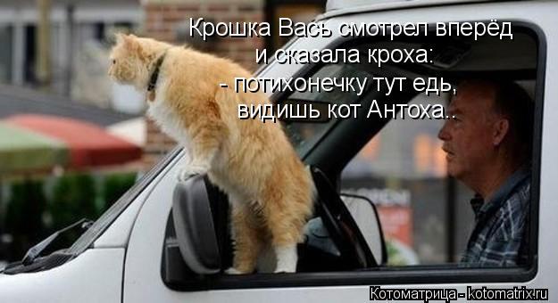 Котоматрица: Крошка Вась смотрел вперёд и сказала кроха: - потихонечку тут едь, видишь кот Антоха..