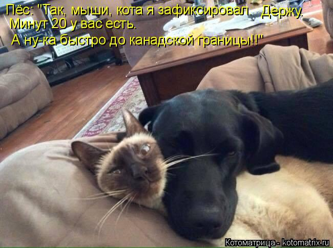 """Котоматрица: Пёс: """"Так, мыши, кота я зафиксировал.   Держу.  Минут 20 у вас есть.   А ну-ка быстро до канадской границы!!"""""""