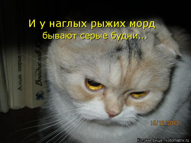 Котоматрица: И у наглых рыжих морд бывают серые будни...