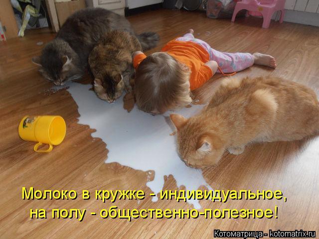 Котоматрица: Молоко в кружке - индивидуальное, на полу - общественно-полезное!