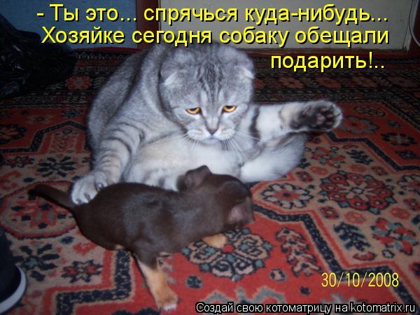 Котоматрица: - Ты это... спрячься куда-нибудь... Хозяйке сегодня собаку обещали  подарить!..