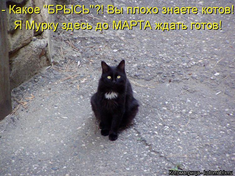"""Котоматрица: - Какое """"БРЫСЬ""""?! Вы плохо знаете котов! Я Мурку здесь до МАРТА ждать готов!"""
