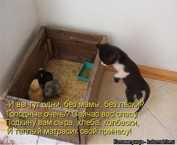 Котоматрица: -И вы тут одни, без мамы, без ласки? Голодные очень? Сейчас вас спасу, Подкину вам сыра, хлеба, колбаски, И теплый матрасик свой принесу!