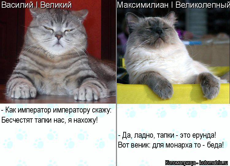 http://kotomatrix.ru/images/lolz/2016/02/29/kotomatritsa_0.jpg
