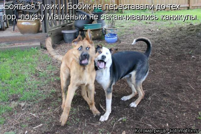 Котоматрица: Бояться Тузик и Бобик не переставали до тех пор, пока у Машеньки не заканчивались каникулы.