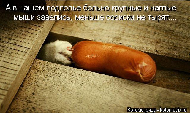 Котоматрица: А в нашем подполье больно крупные и наглые  мыши завелись, меньше сосиски не тырят....