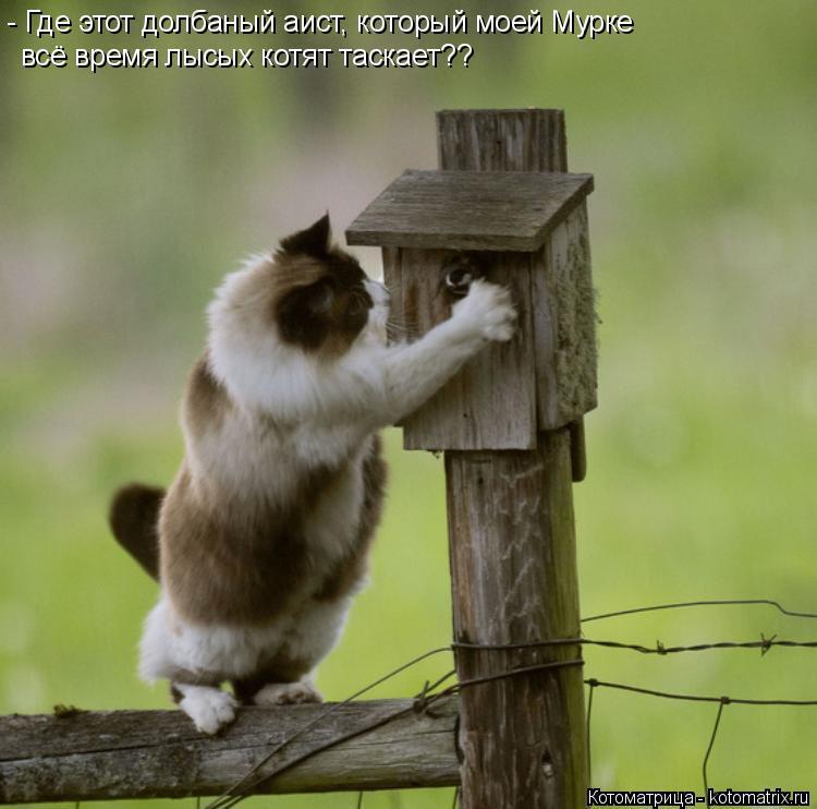 Котоматрица: - Где этот долбаный аист, который моей Мурке всё время лысых котят таскает??