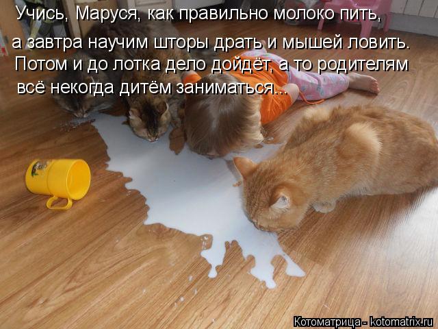 Котоматрица: Учись, Маруся, как правильно молоко пить, а завтра научим шторы драть и мышей ловить. Потом и до лотка дело дойдёт, а то родителям  всё некогд