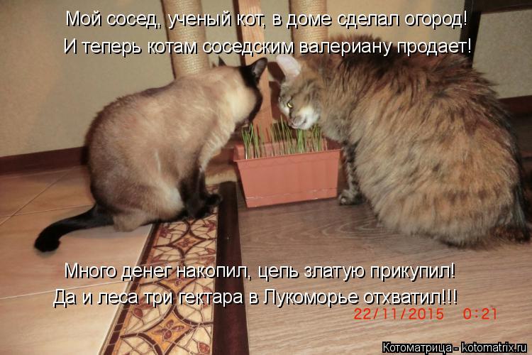 Котоматрица: И теперь котам соседским валериану продает! Много денег накопил, цепь златую прикупил! Да и леса три гектара в Лукоморье отхватил!!! Мой сосе
