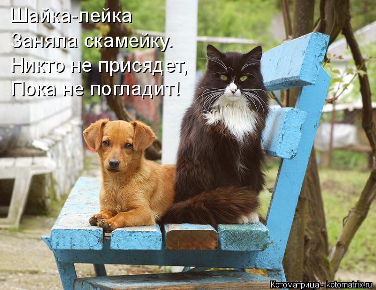 Котоматрица: Шайка-лейка Заняла скамейку. Никто не присядет, Пока не погладит!
