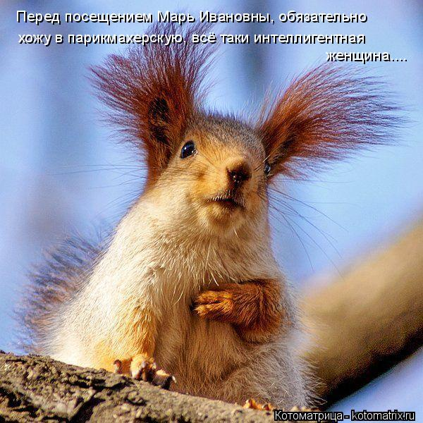 Котоматрица: Перед посещением Марь Ивановны, обязательно хожу в парикмахерскую, всё таки интеллигентная женщина....