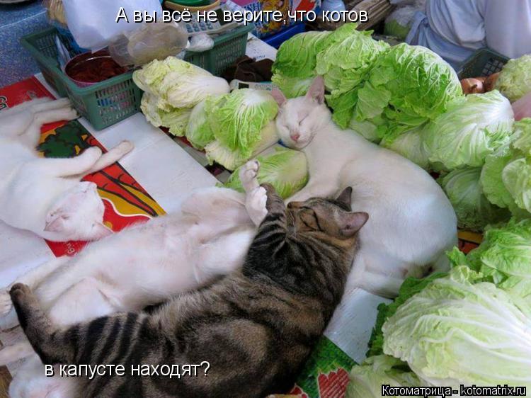 Котоматрица: А вы всё не верите,что котов в капусте находят?