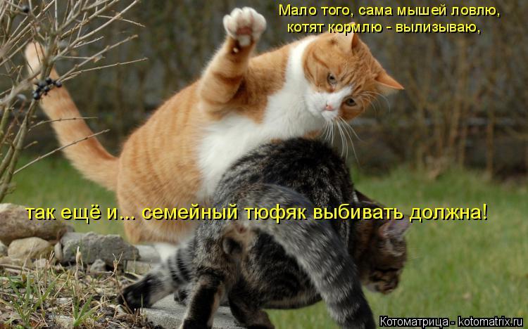 Котоматрица: котят кормлю - вылизываю, Мало того, сама мышей ловлю, так ещё и... семейный тюфяк выбивать должна!