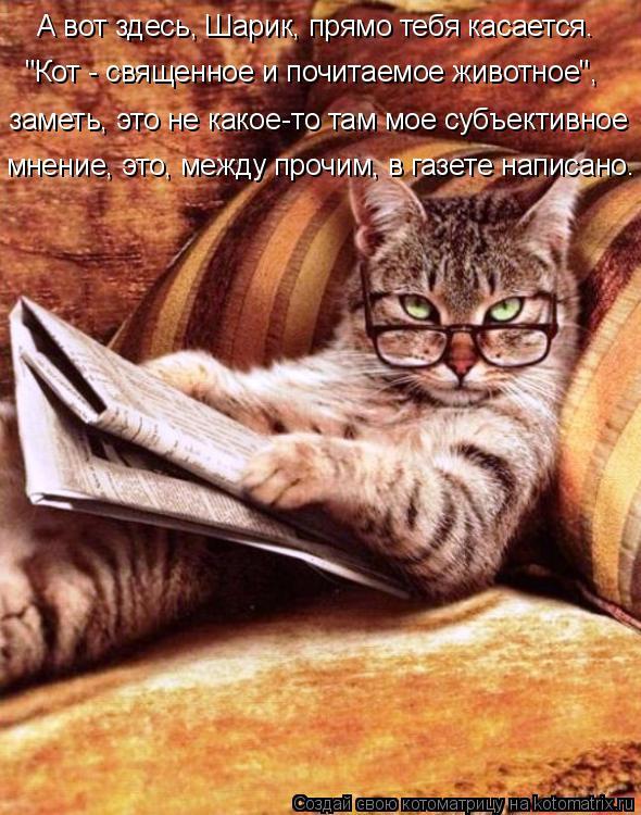 """Котоматрица: А вот здесь, Шарик, прямо тебя касается. """"Кот - священное и почитаемое животное"""", заметь, это не какое-то там мое субъективное мнение, это, межд"""