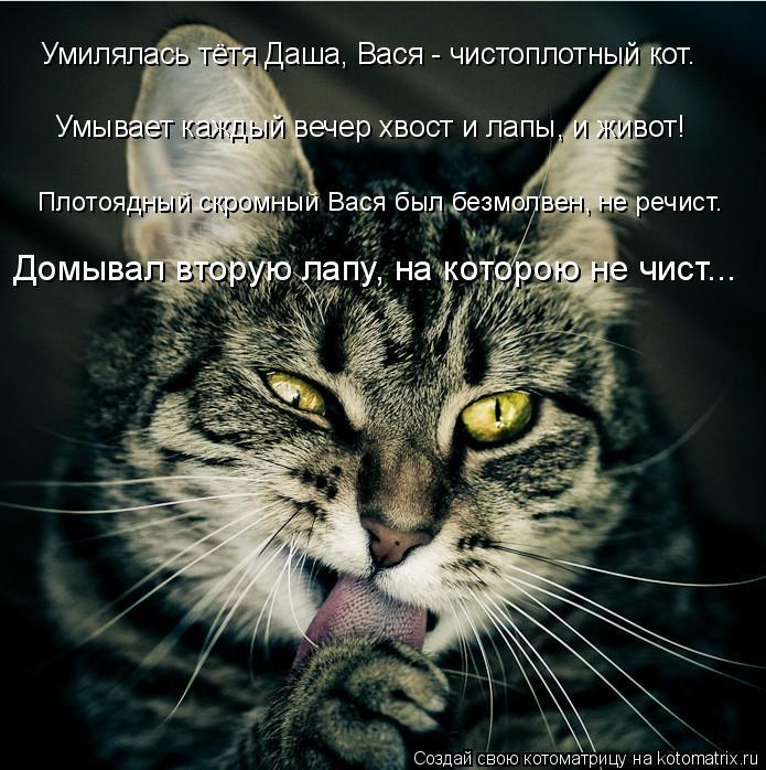 Котоматрица: Умилялась тётя Даша, Вася - чистоплотный кот. Умывает каждый вечер хвост и лапы, и живот! Плотоядный скромный Вася был безмолвен, не речист.