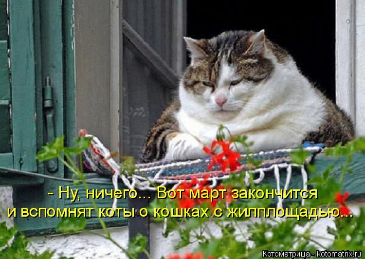 Котоматрица: - Ну, ничего... Вот март закончится и вспомнят коты о кошках с жилплощадью...