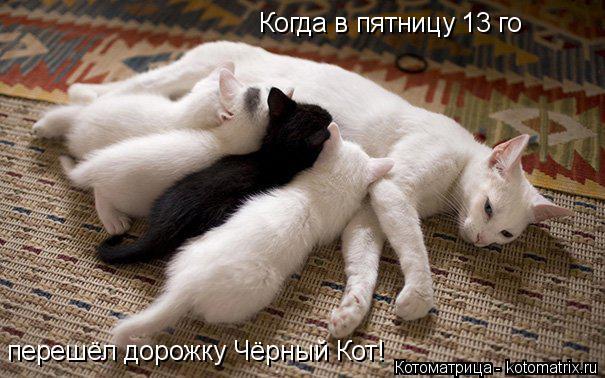 Котоматрица: Когда в пятницу 13 го перешёл дорожку Чёрный Кот!