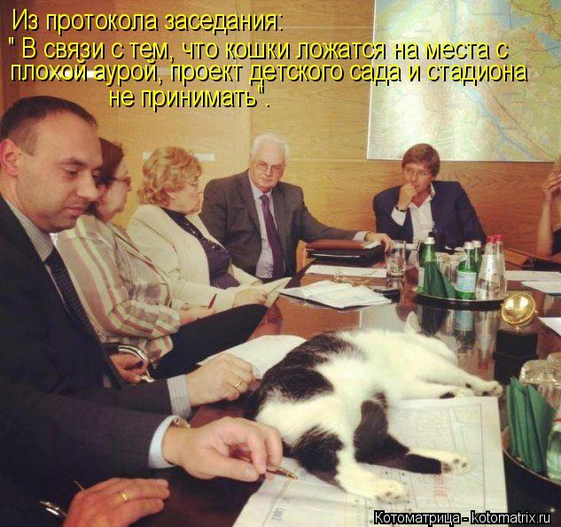 """Котоматрица: Из протокола заседания: """" В связи с тем, что кошки ложатся на места с  плохой аурой, проект детского сада и стадиона не принимать""""."""