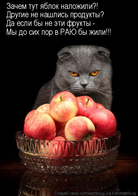 Котоматрица: Зачем тут яблок наложили?! Другие не нашлись продукты? Да если бы не эти фрукты -  Мы до сих пор в РАЮ бы жили!!!