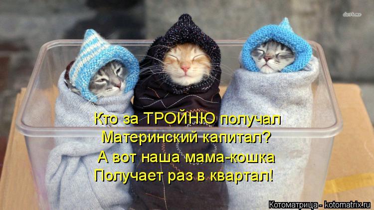 Котоматрица: Кто за ТРОЙНЮ получал Материнский капитал? А вот наша мама-кошка Получает раз в квартал!