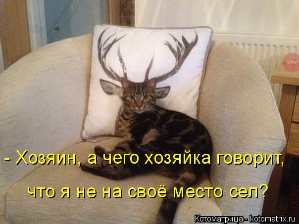 Котоматрица: - Хозяин, а чего хозяйка говорит,  что я не на своё место сел?