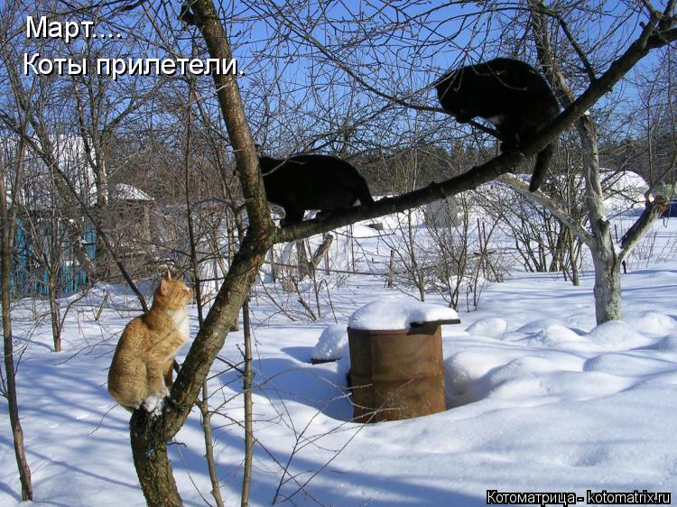 Котоматрица: Март.... Коты прилетели.