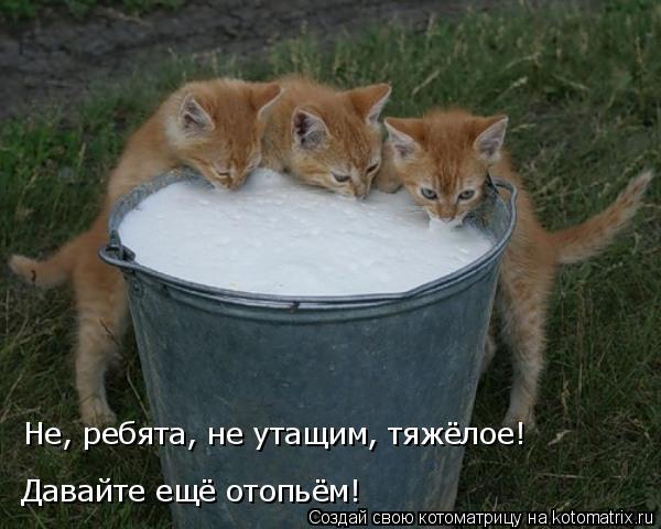 Котоматрица: Не, ребята, не утащим, тяжёлое! Давайте ещё отопьём!