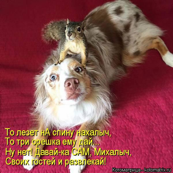 Котоматрица: То лезет нА спину нахалыч, То три орешка ему дай... Ну нет! Давай-ка САМ, Михалыч, Своих гостей и развлекай!