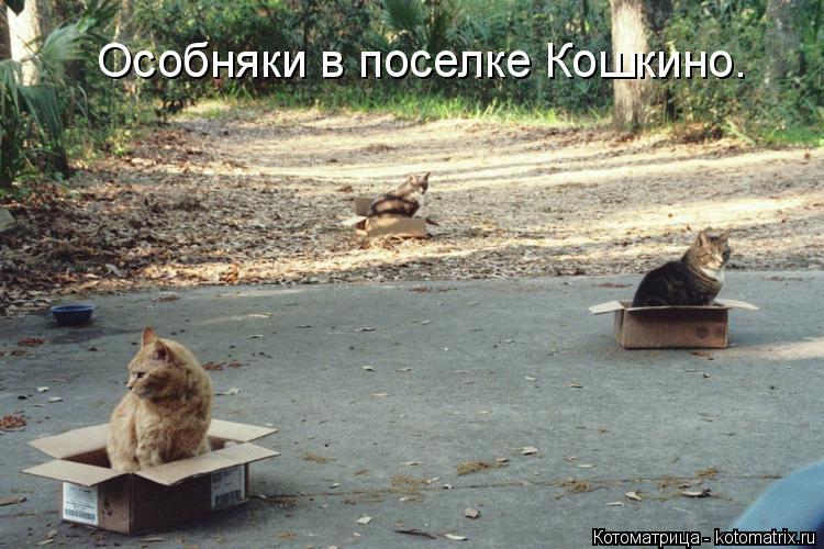 Котоматрица: Особняки в поселке Кошкино.