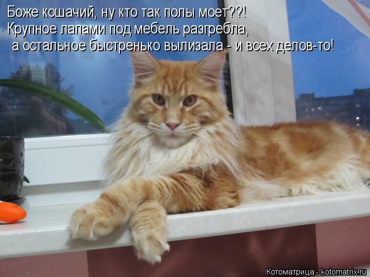 Котоматрица: Боже кошачий, ну кто так полы моет??! Крупное лапами под мебель разгребла,  а остальное быстренько вылизала - и всех делов-то!