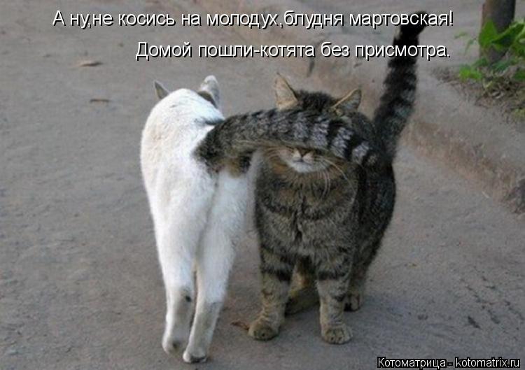 Котоматрица: А ну,не косись на молодух,блудня мартовская! Домой пошли-котята без присмотра.