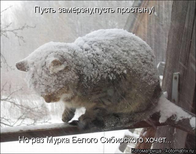 Котоматрица: Пусть замёрзну,пусть простыну! Но раз Мурка Белого Сибирского хочет...
