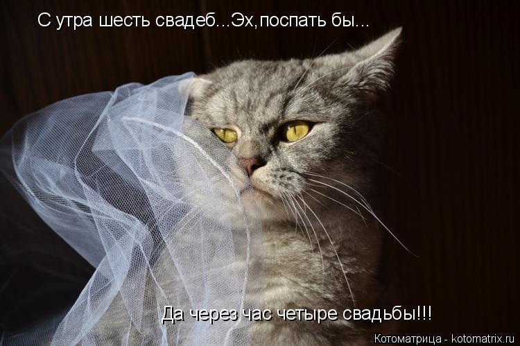 Котоматрица: Да через час четыре свадьбы!!! С утра шесть свадеб...Эх,поспать бы...