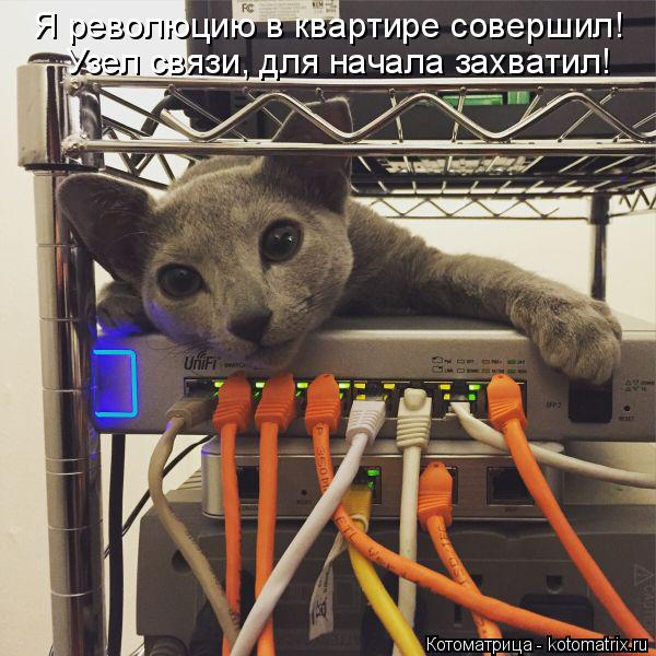 Котоматрица: Я революцию в квартире совершил! Узел связи, для начала захватил!