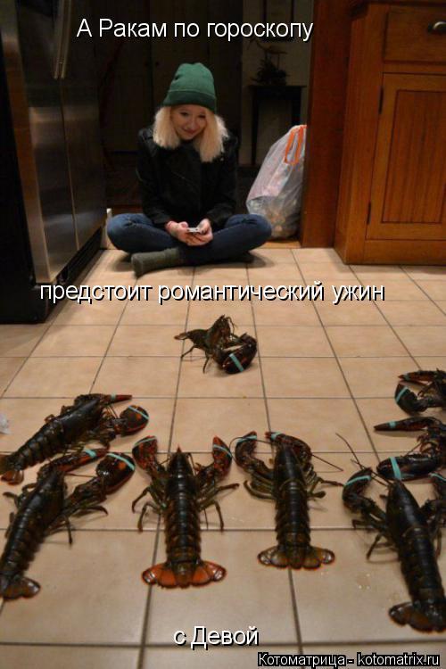 Котоматрица: А Ракам по гороскопу предстоит романтический ужин с Девой