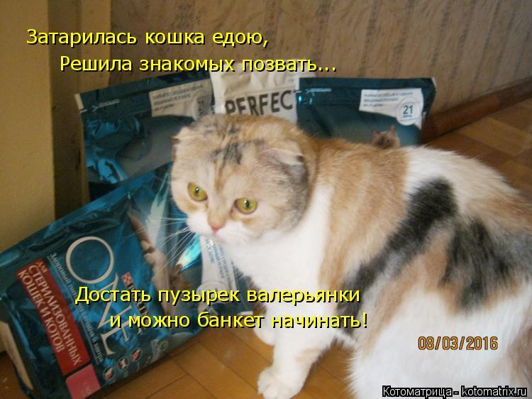Котоматрица: Затарилась кошка едою, Решила знакомых позвать... Достать пузырек валерьянки и можно банкет начинать!