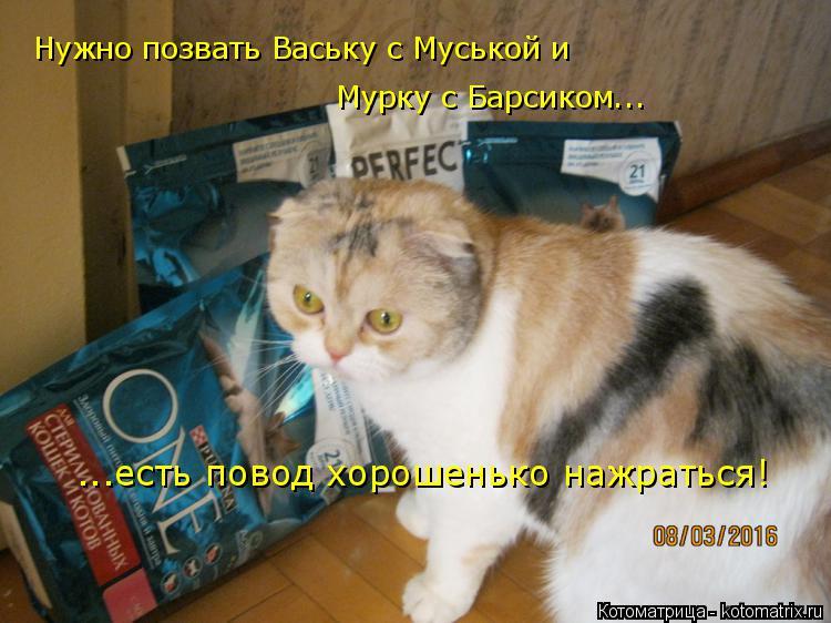 Котоматрица: Нужно позвать Ваську с Муськой и  Мурку с Барсиком... ...есть повод хорошенько нажраться!