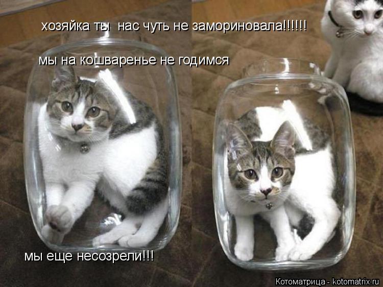 Котоматрица: хозяйка ты  нас чуть не замориновала!!!!!! мы на кошваренье не годимся  мы еще несозрели!!!