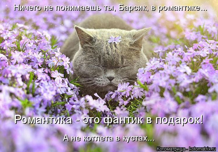 Котоматрица: Романтика - это фантик в подарок! Ничего не понимаешь ты, Барсик, в романтике... А не котлета в кустах...