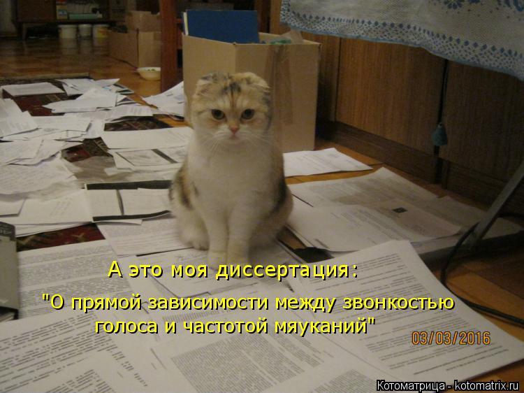 """Котоматрица: """"О прямой зависимости между звонкостью голоса и частотой мяуканий"""" А это моя диссертация:"""