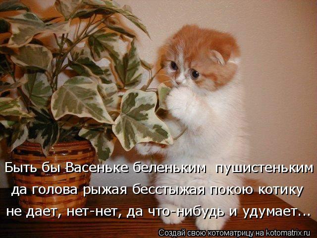 Котоматрица: Быть бы Васеньке беленьким  пушистеньким да голова рыжая бесстыжая покою котику не дает, нет-нет, да что-нибудь и удумает...