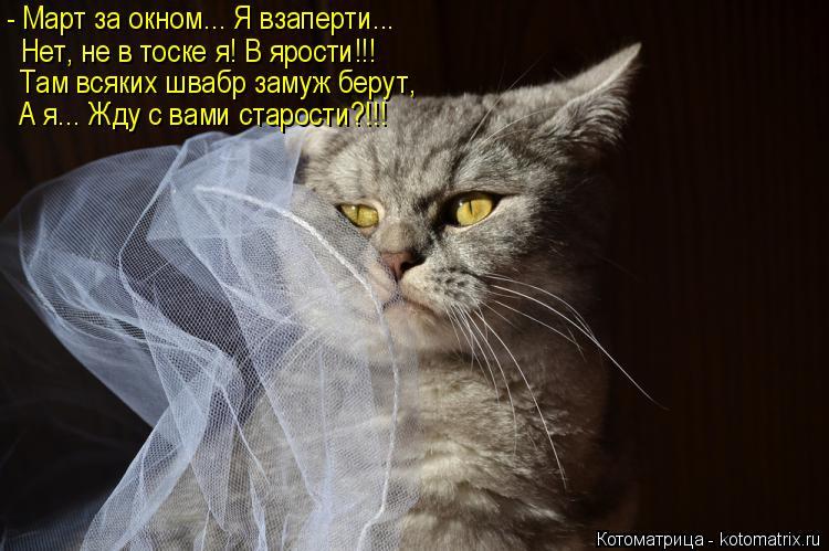 Котоматрица: - Март за окном... Я взаперти...   Нет, не в тоске я! В ярости!!! Там всяких швабр замуж берут, А я... Жду с вами старости?!!!