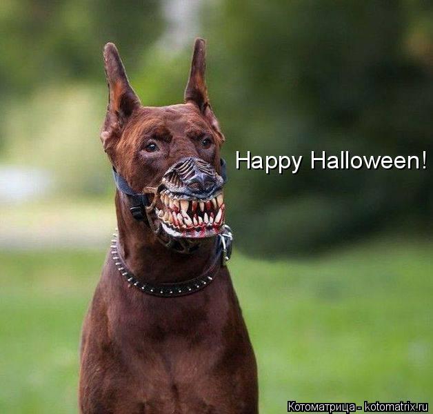 Котоматрица: Happy Halloween!
