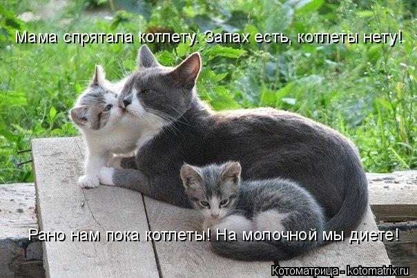 Котоматрица: Мама спрятала котлету. Запах есть, котлеты нету! Рано нам пока котлеты! На молочной мы диете!