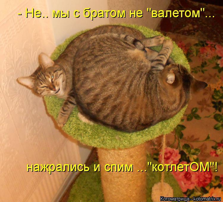 """Котоматрица: - Не.. мы с братом не """"валетом""""... нажрались и спим ...""""котлетОМ""""!"""