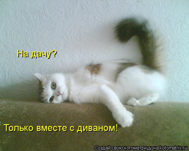 Котоматрица: На дачу?  Только вместе с диваном!