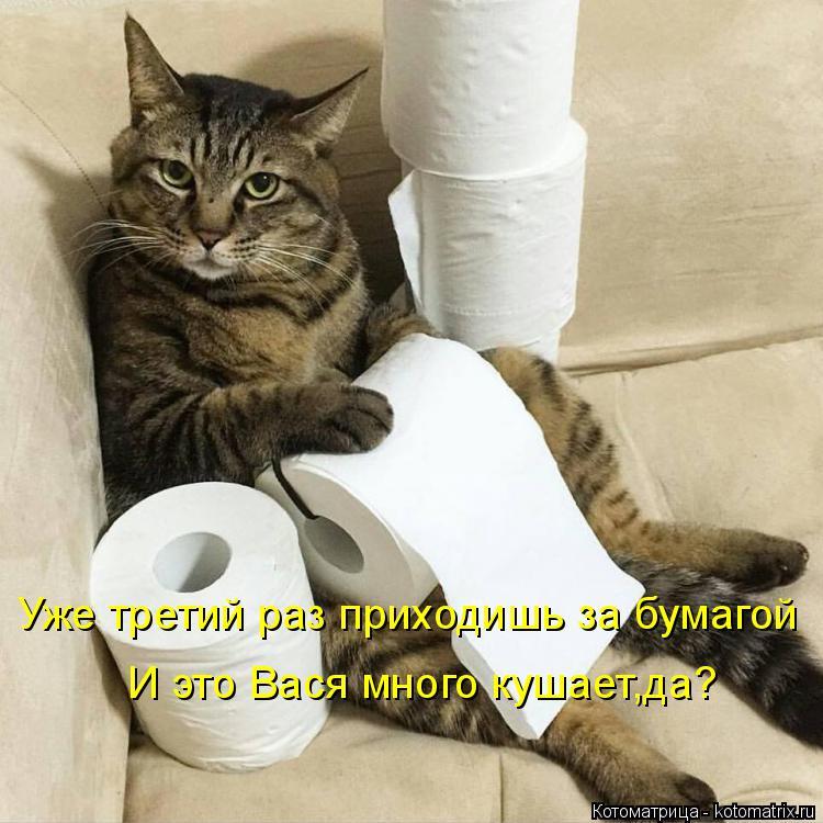 Котоматрица: Уже третий раз приходишь за бумагой И это Вася много кушает,да?