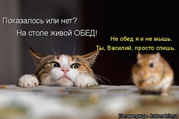 Котоматрица: Показалось или нет? На столе живой ОБЕД! Ты, Василий, просто спишь. Не обед я и не мышь.